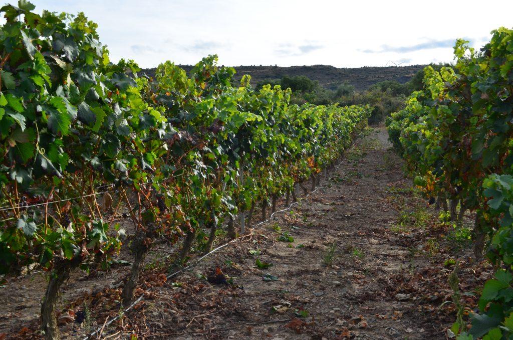 Un ciclo cerrado, un ciclo que comienza. Después de la vendimia nacen los caldos en los lagares y posteriormente en las barricas cuya impronta permanecerá para siempre con el vino.