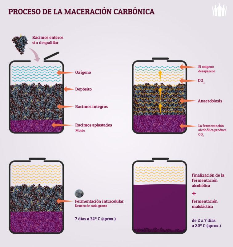 Los vinos de maceración carbónica tienen un doble proceso natural de fermentación. En la imagen puedes ver las dos fases del proceso: Fermentación intracelular que se da dentro de la propia uva una vez finalizada se prensan los granos y para empezar con la fermentación del mosto ya libre de residuos sólidos.