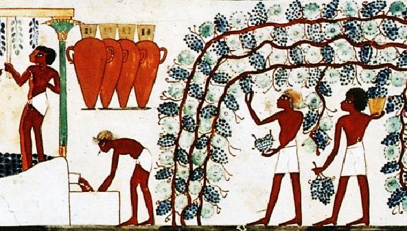 Del vino fenicio a las Denominaciones de Origen. Primero los fenicios, luego los cartagineses, posteriormente los romanos y los cristianos en la edad media fomentaron el cultivo del vinos en la península Ibérica.