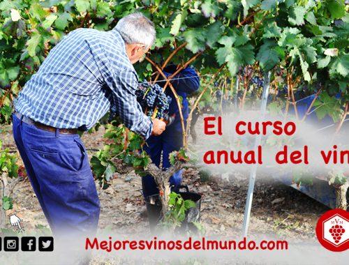 La vendimia marca el inicio del ciclo del vino.
