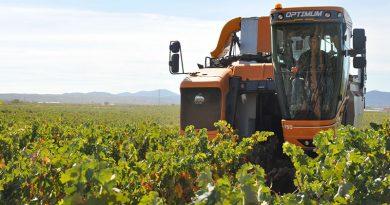 DOP Cariñena prevé vendimiar 89 millones de kilos