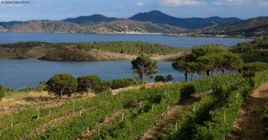 Resultados de los vinos de DO Empordà en la guía Peñín