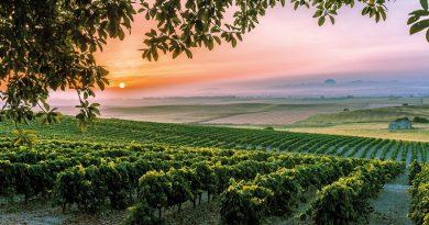 """La Ruta del Vino y Brandy del Marco de Jerez renueva con éxito su certificación como """"Ruta del Vino de España"""". La Asociación de Ciudades del Vino de España (ACEVIN), entidad que aglutina a todas las Rutas del Vino certificadas de nuestro país, reconoce así los niveles de excelencia de nuestro destino enoturístico, que un año más ha sido el más visitado de nuestro país."""