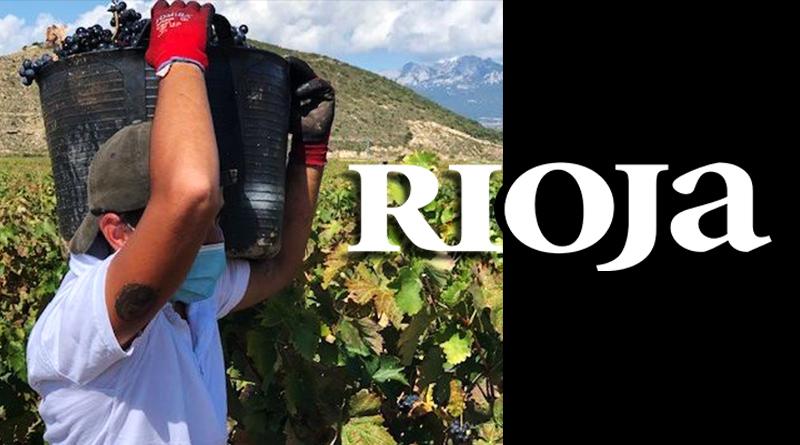 Vendimia general en DOCa Rioja tras los últimos controles de maduración de la uvas en toda la zona DOCA Rioja.